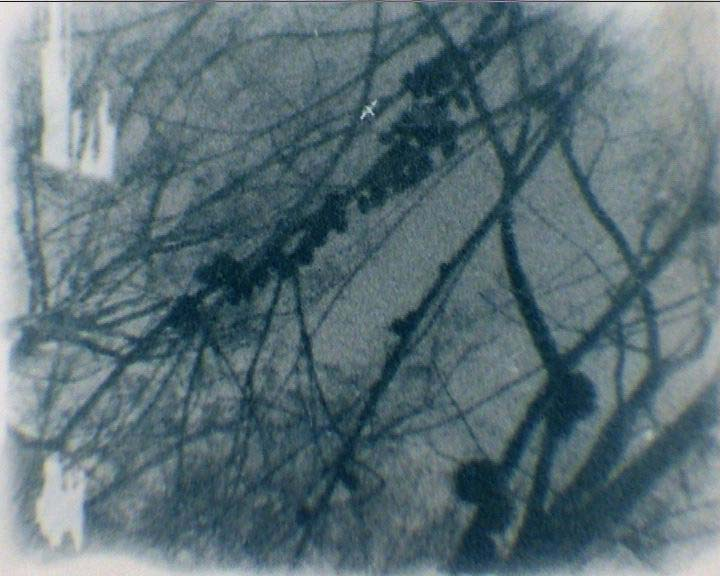 Frame from Conimbla